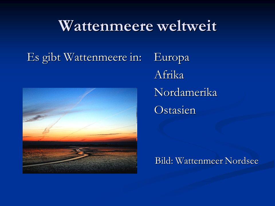 Wattenmeere weltweit Es gibt Wattenmeere in: Europa AfrikaNordamerikaOstasien Bild: Wattenmeer Nordsee
