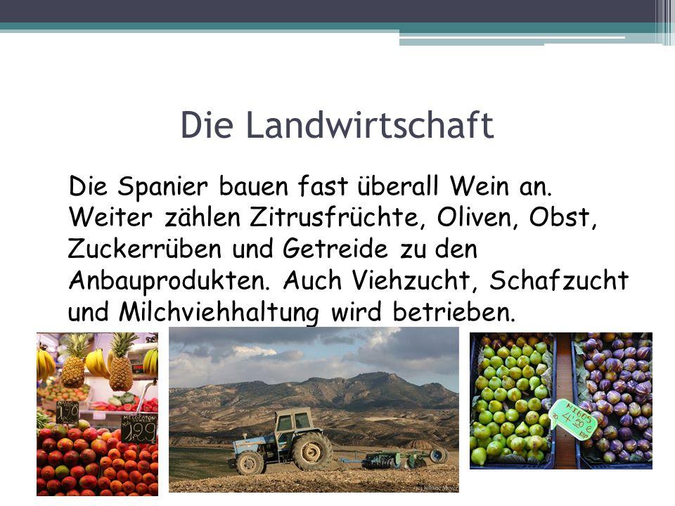Die Landwirtschaft Die Spanier bauen fast überall Wein an. Weiter zählen Zitrusfrüchte, Oliven, Obst, Zuckerrüben und Getreide zu den Anbauprodukten.