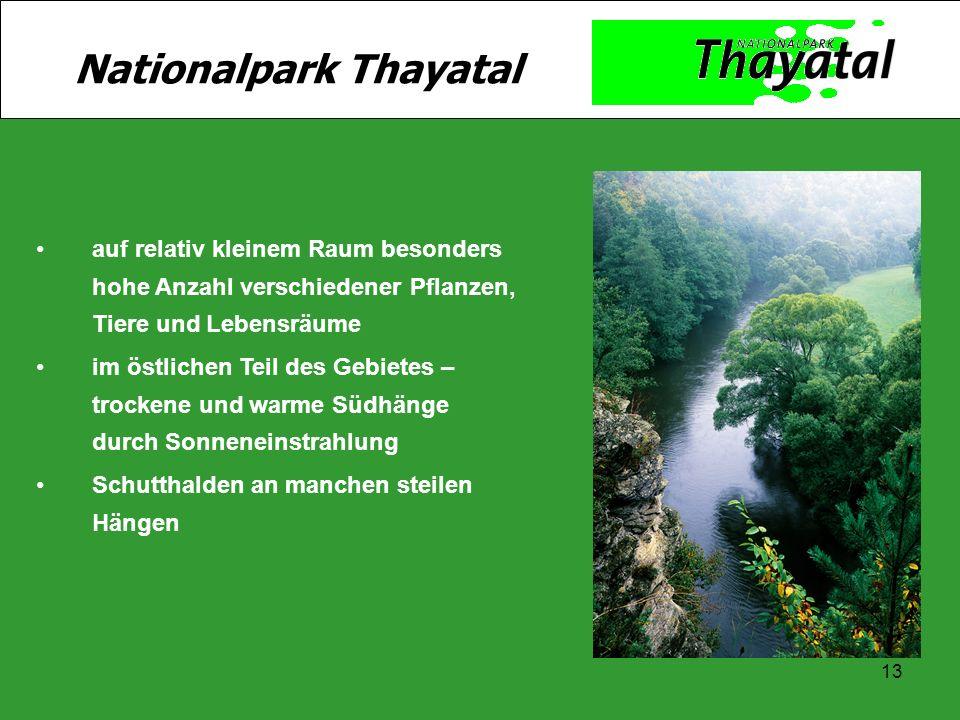13 Nationalpark Thayatal auf relativ kleinem Raum besonders hohe Anzahl verschiedener Pflanzen, Tiere und Lebensräume im östlichen Teil des Gebietes –