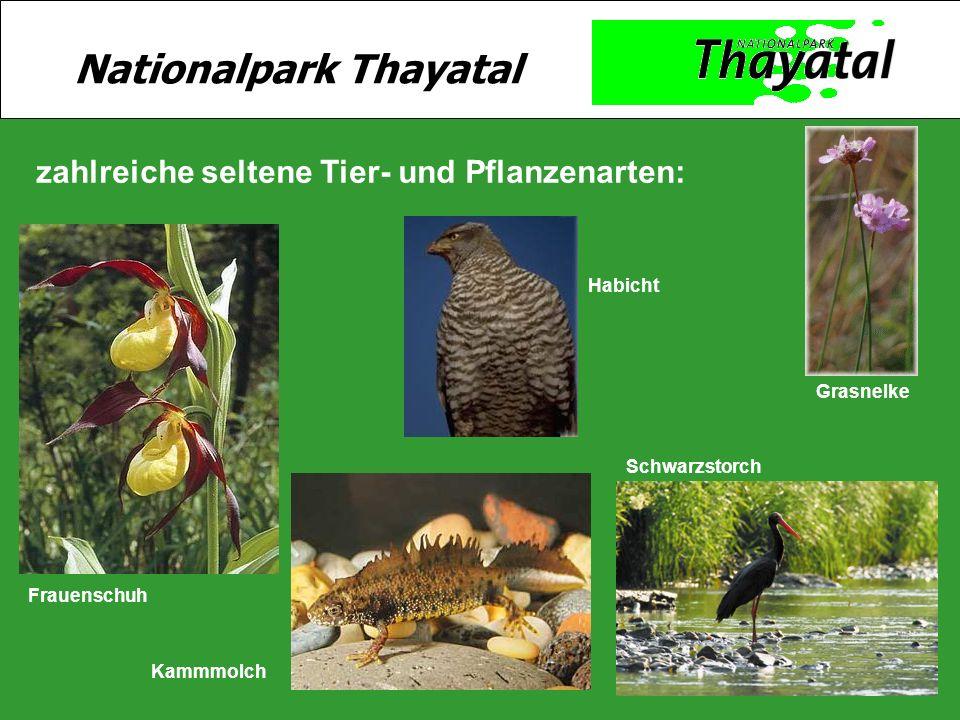 15 zahlreiche seltene Tier- und Pflanzenarten: Schwarzstorch Habicht Kammmolch Grasnelke Frauenschuh Nationalpark Thayatal