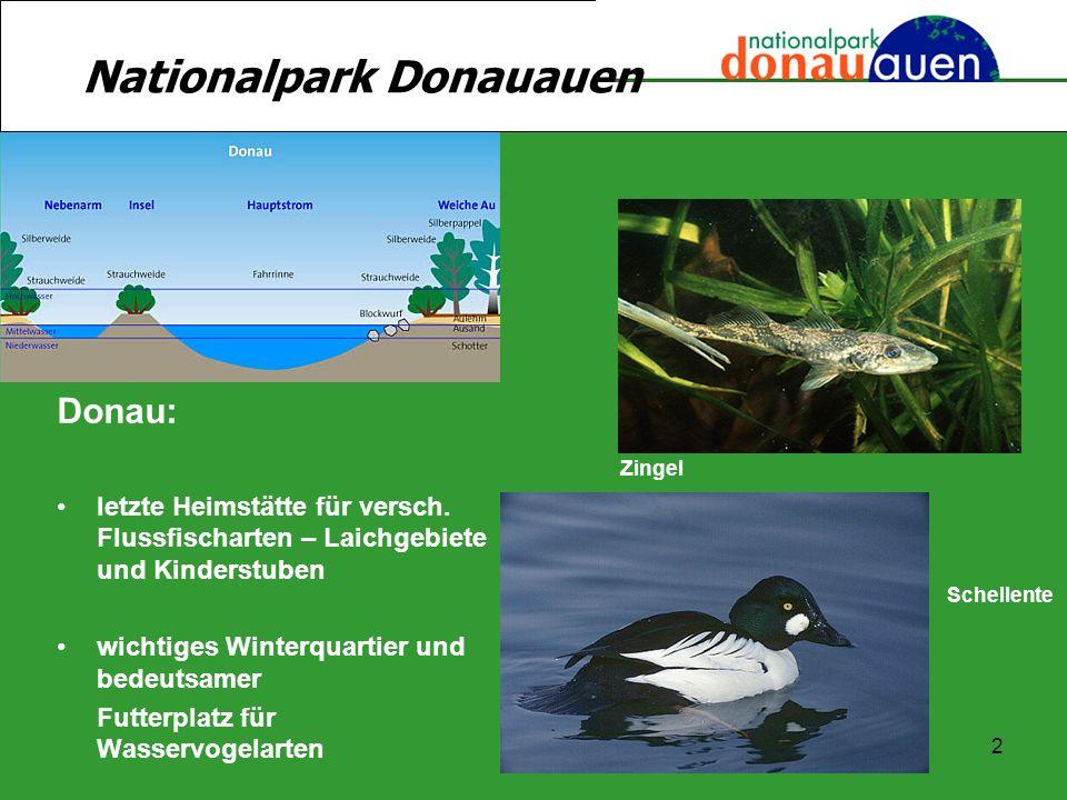 2 Donau: letzte Heimstätte für versch. Flussfischarten – Laichgebiete und Kinderstuben wichtiges Winterquartier und bedeutsamer Futterplatz für Wasser