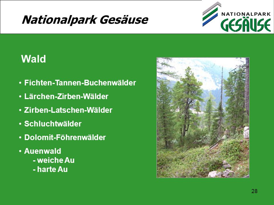 28 Nationalpark Gesäuse Wald Fichten-Tannen-Buchenwälder Lärchen-Zirben-Wälder Zirben-Latschen-Wälder Schluchtwälder Dolomit-Föhrenwälder Auenwald - w