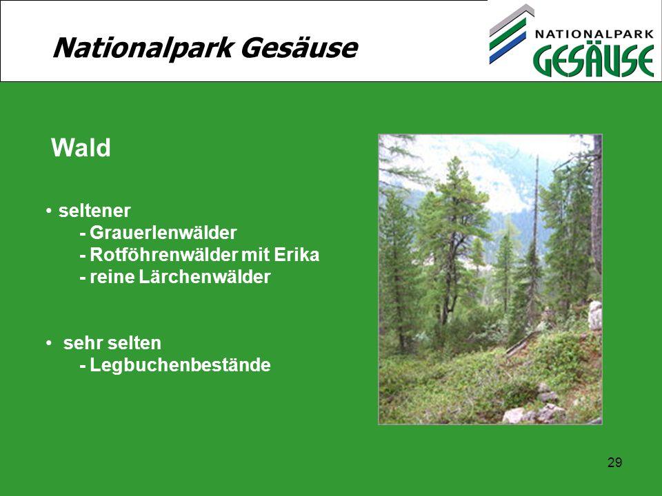 29 Nationalpark Gesäuse Wald seltener - Grauerlenwälder - Rotföhrenwälder mit Erika - reine Lärchenwälder sehr selten - Legbuchenbestände
