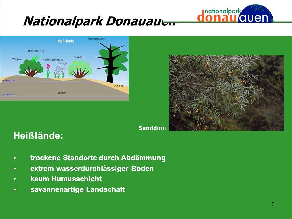 7 Nationalpark Donauauen Heißlände: trockene Standorte durch Abdämmung extrem wasserdurchlässiger Boden kaum Humusschicht savannenartige Landschaft Sa