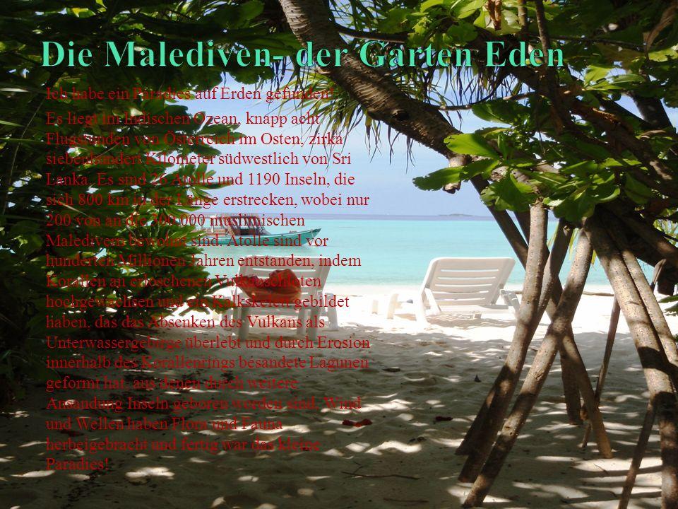Ich habe ein Paradies auf Erden gefunden! Es liegt im Indischen Ozean, knapp acht Flugstunden von Österreich im Osten, zirka siebenhundert Kilometer s
