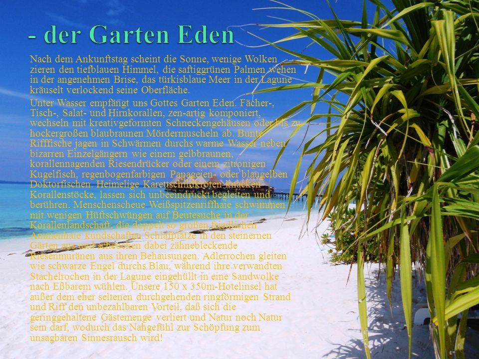 Nach dem Ankunftstag scheint die Sonne, wenige Wolken zieren den tiefblauen Himmel, die saftiggrünen Palmen wehen in der angenehmen Brise, das türkisblaue Meer in der Lagune kräuselt verlockend seine Oberfläche.