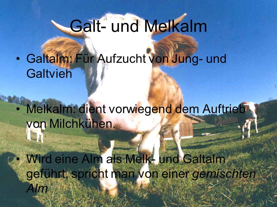 Galt- und Melkalm Galtalm: Für Aufzucht von Jung- und Galtvieh Melkalm: dient vorwiegend dem Auftrieb von Milchkühen. Wird eine Alm als Melk- und Galt