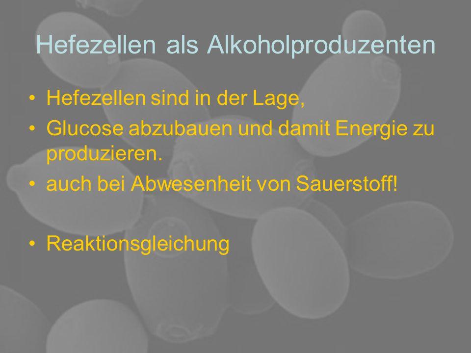 Hefezellen als Alkoholproduzenten Hefezellen sind in der Lage, Glucose abzubauen und damit Energie zu produzieren. auch bei Abwesenheit von Sauerstoff