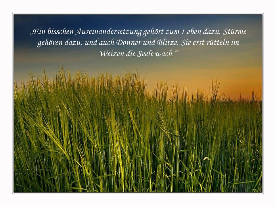 """Gott sagte: """"Weil es keine einzige Herausforderung gab, keinen Konflikt, keine Reibung, weil du alles vermieden hast, was schlecht ist, blieb der Weiz"""