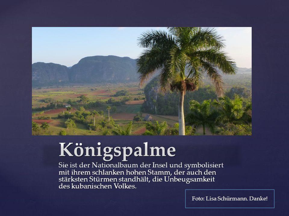 { Königspalme Sie ist der Nationalbaum der Insel und symbolisiert mit ihrem schlanken hohen Stamm, der auch den stärksten Stürmen standhält, die Unbeugsamkeit des kubanischen Volkes.