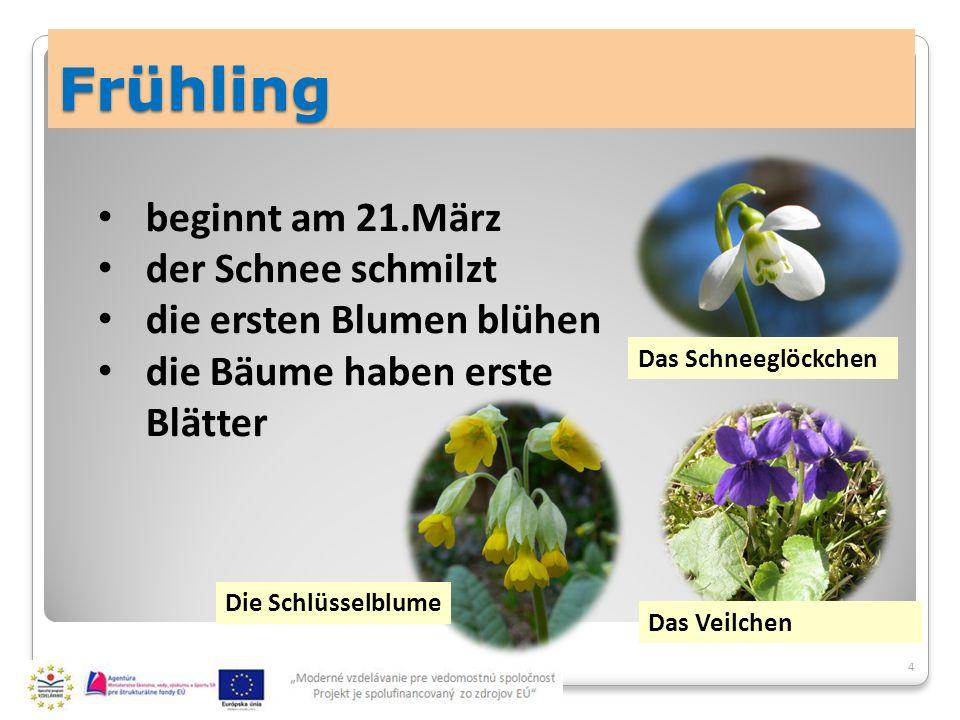 Frühling 4 beginnt am 21.März der Schnee schmilzt die ersten Blumen blühen die Bäume haben erste Blätter Das Schneeglöckchen Das Veilchen Die Schlüsselblume