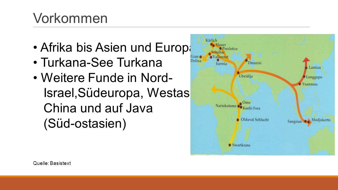Unterarten Java-Mensch ( Homo erectus Javaensis), Peking-Mensch( Homo pekenensis), Heidelbergmensch ( Homo Heidelberginses ) Quelle: Basistext +helles-koepfchen.de/Geschichte-der- Evolution/urmensch-homo-erectus-neanderthaler-und-homo-sapiens.html