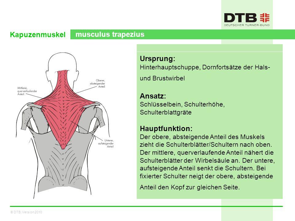 © DTB, Version 2010 Kapuzenmuskel musculus trapezius Ursprung: Hinterhauptschuppe, Dornfortsätze der Hals- und Brustwirbel Ansatz: Schlüsselbein, Schu