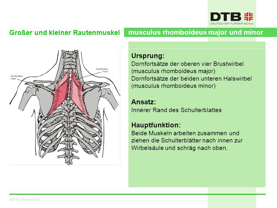 © DTB, Version 2010 Großer und kleiner Rautenmuskel musculus rhomboideus major und minor Ursprung: Dornfortsätze der oberen vier Brustwirbel (musculus