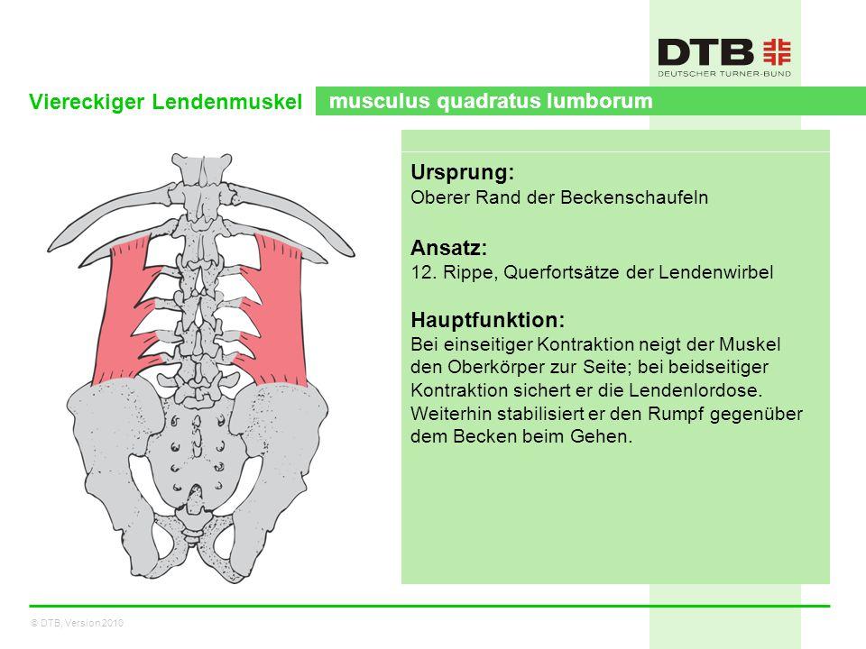 © DTB, Version 2010 Viereckiger Lendenmuskel musculus quadratus lumborum Ursprung: Oberer Rand der Beckenschaufeln Ansatz: 12. Rippe, Querfortsätze de