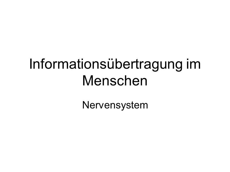 Informationsübertragung im Menschen Nervensystem