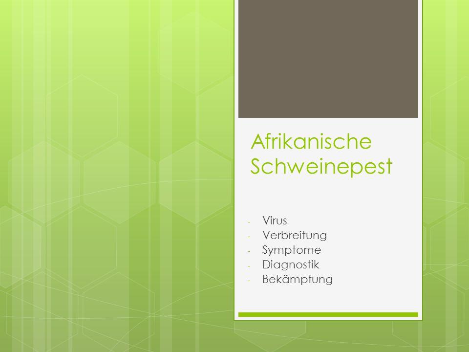 Virus  Asfivirus der Gattung Asfarviridae,  Behüllt, ds-DNA  Endemisch auf Sardinien, Warzenschweinen bilden das Virusreservoir (keine Symptome)  !!.