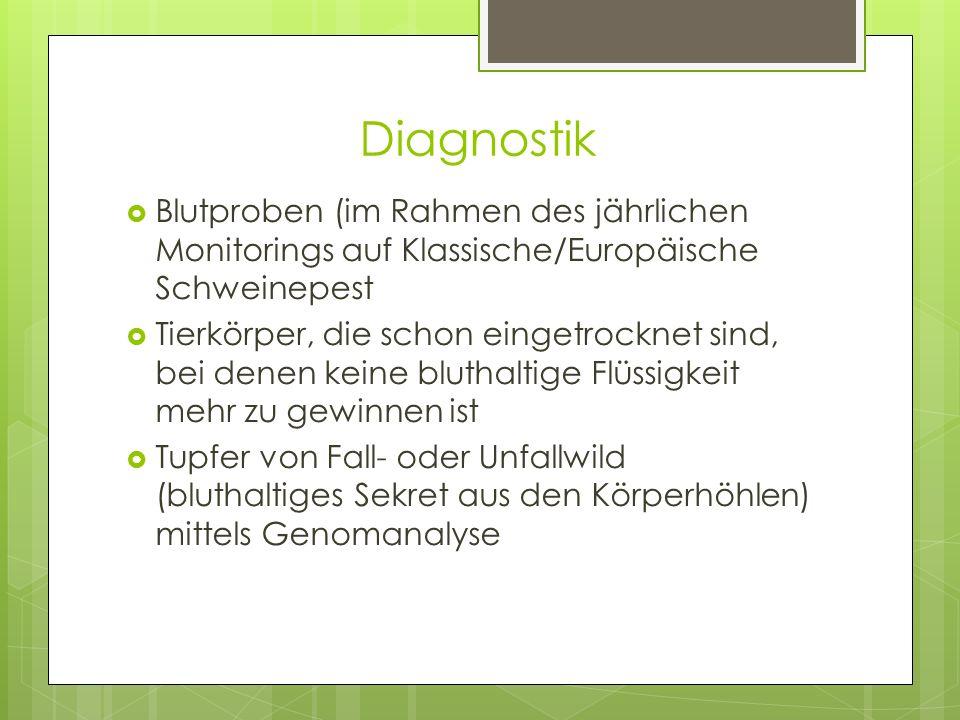 Diagnostik  Blutproben (im Rahmen des jährlichen Monitorings auf Klassische/Europäische Schweinepest  Tierkörper, die schon eingetrocknet sind, bei