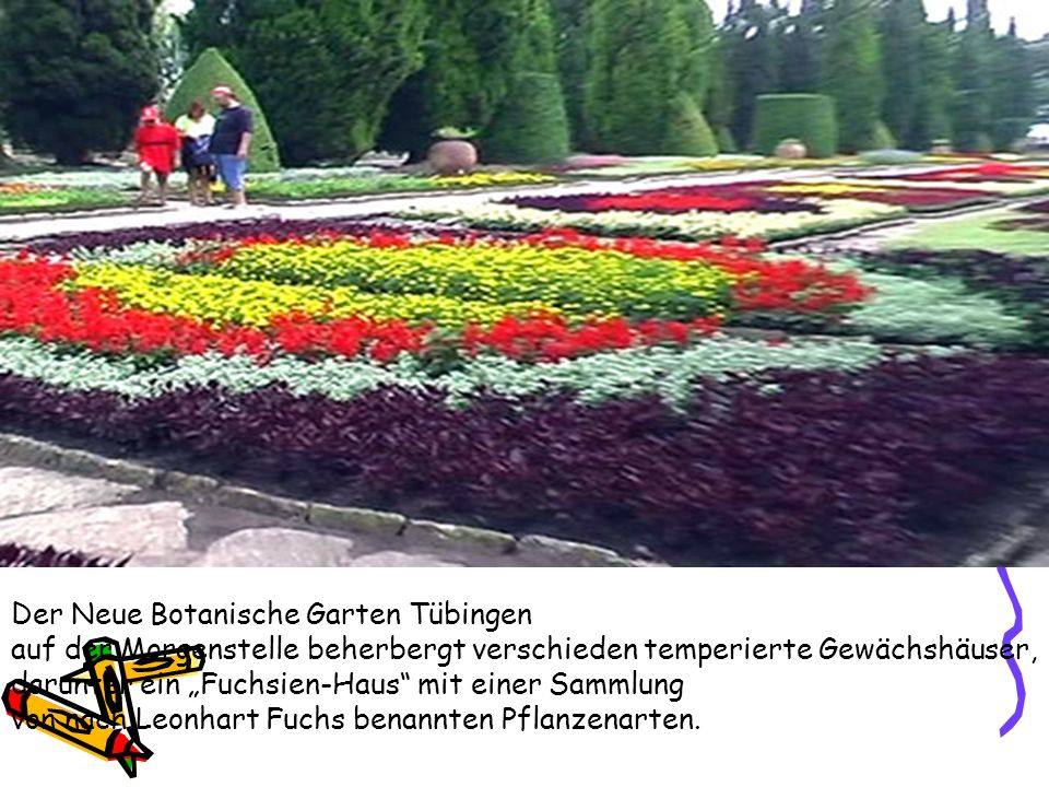 """Der Neue Botanische Garten Tübingen auf der Morgenstelle beherbergt verschieden temperierte Gewächshäuser, darunter ein """"Fuchsien-Haus mit einer Sammlung von nach Leonhart Fuchs benannten Pflanzenarten."""