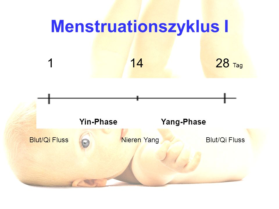 Menstruationszyklus I Yin-Phase Yang-Phase Blut/Qi Fluss Nieren Yang Blut/Qi Fluss 1 14 28 Tag