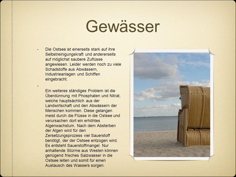 Gewässer Die Ostsee ist einerseits stark auf ihre Selbstreinigungskraft und andererseits auf möglichst saubere Zuflüsse angewiesen. Leider werden noch
