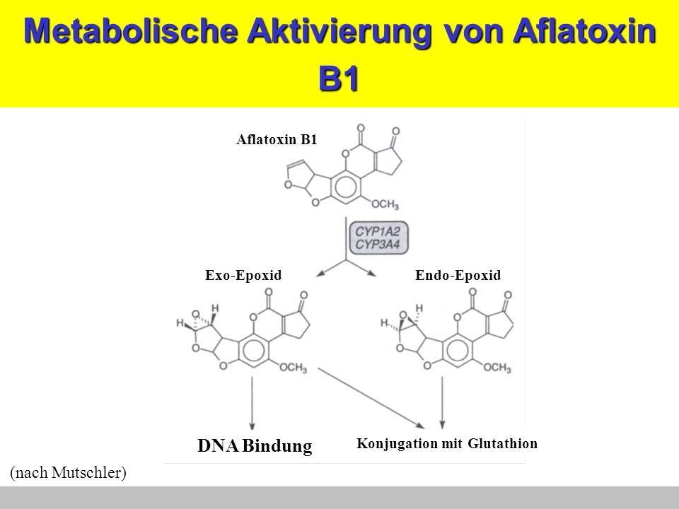 Metabolische Aktivierung von Aflatoxin B1 Endo-EpoxidExo-Epoxid Aflatoxin B1 Konjugation mit Glutathion DNA Bindung (nach Mutschler)