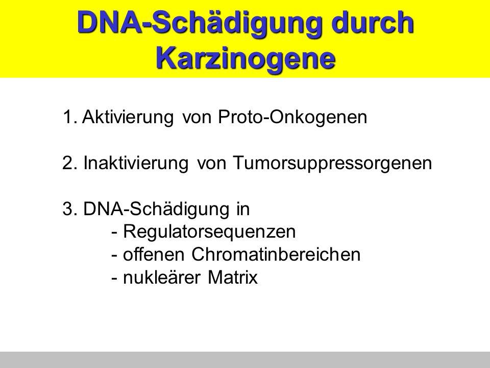 DNA-Schädigung durch Karzinogene 1. Aktivierung von Proto-Onkogenen 2. Inaktivierung von Tumorsuppressorgenen 3. DNA-Schädigung in - Regulatorsequenze