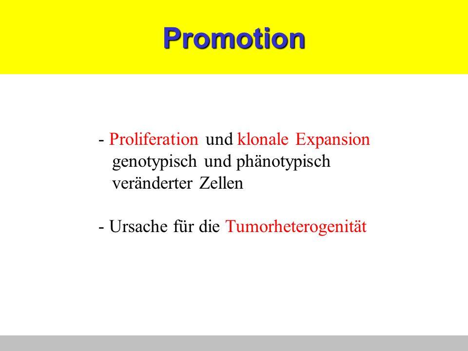 Promotion - Proliferation und klonale Expansion genotypisch und phänotypisch veränderter Zellen - Ursache für die Tumorheterogenität