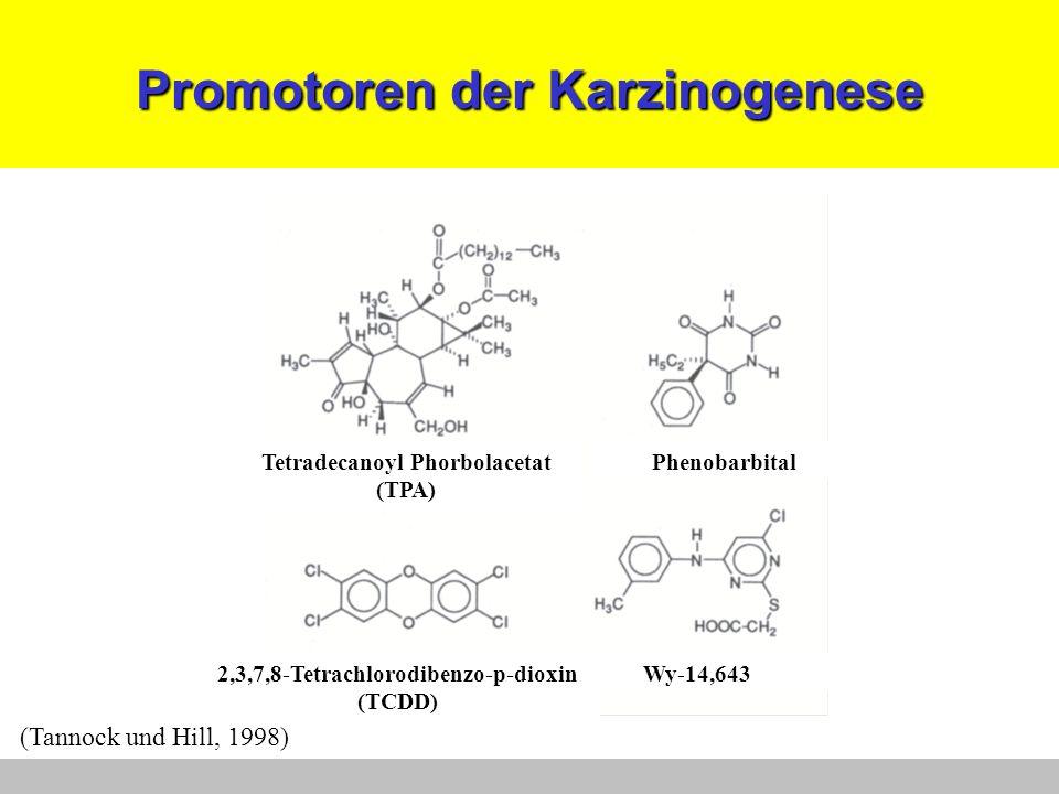 Promotoren der Karzinogenese (Tannock und Hill, 1998) Tetradecanoyl Phorbolacetat (TPA) Phenobarbital Wy-14,6432,3,7,8-Tetrachlorodibenzo-p-dioxin (TC