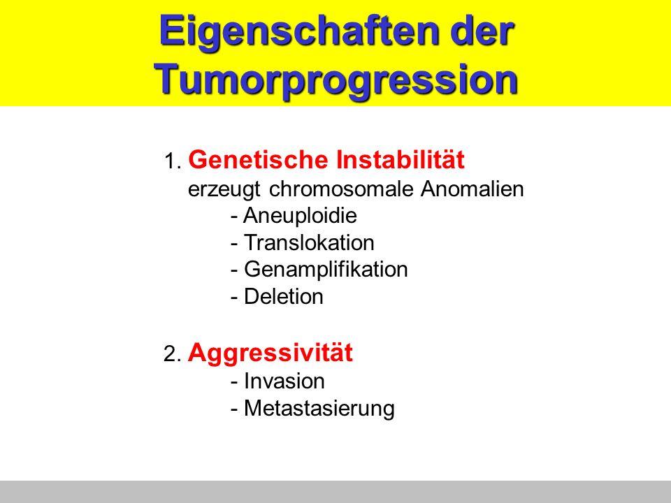 Eigenschaften der Tumorprogression 1. Genetische Instabilität erzeugt chromosomale Anomalien - Aneuploidie - Translokation - Genamplifikation - Deleti