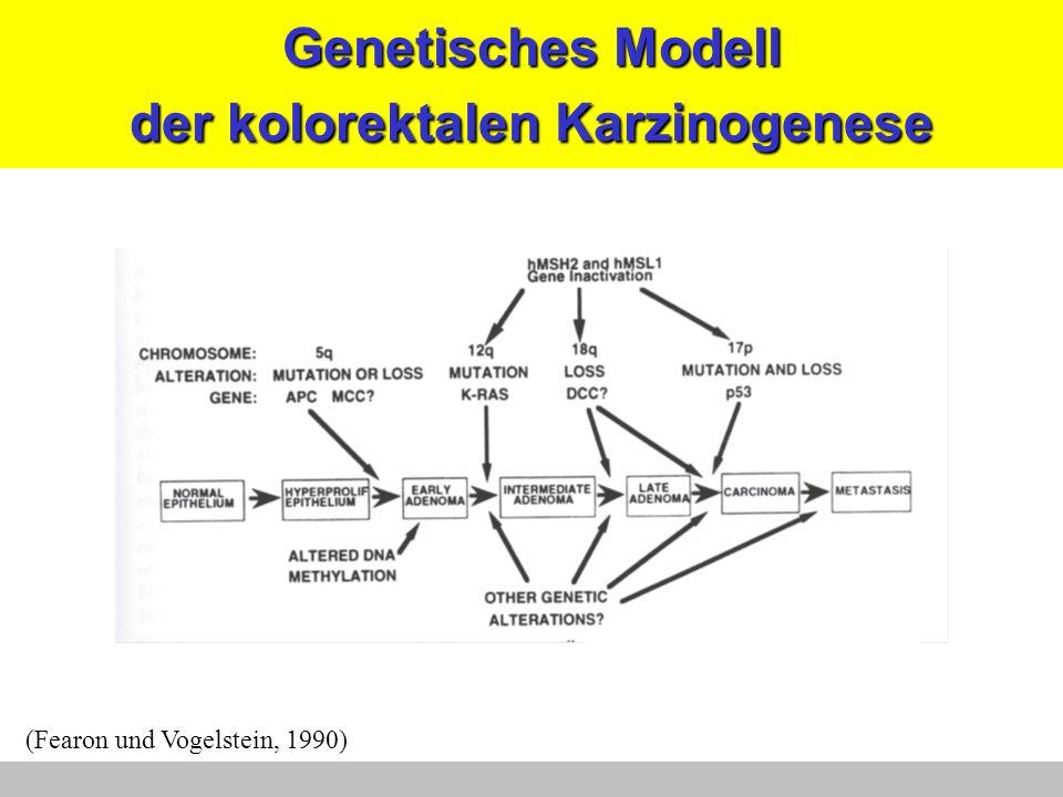 Genetisches Modell der kolorektalen Karzinogenese (Fearon und Vogelstein, 1990)