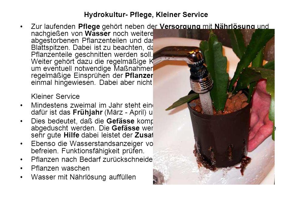 Hydrokultur- Pflege, Kleiner Service Zur laufenden Pflege gehört neben der Versorgung mit Nährlösung und nachgießen von Wasser noch weiteres, wie z.B.