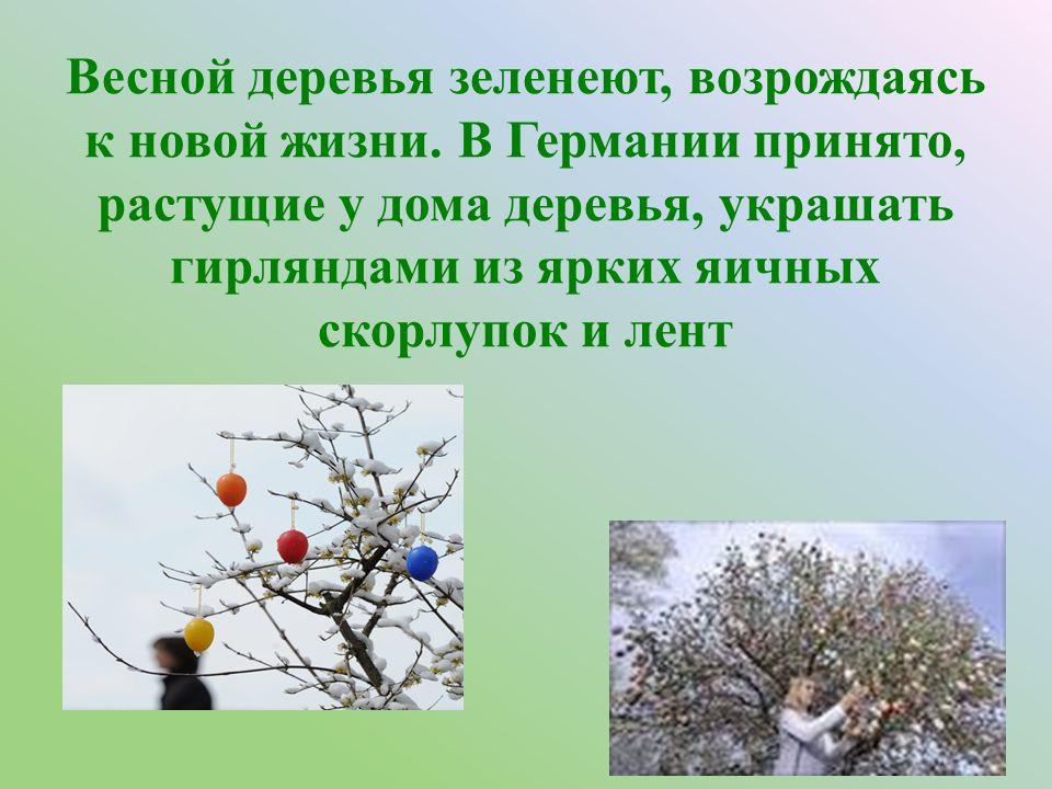 Весной деревья зеленеют, возрождаясь к новой жизни.