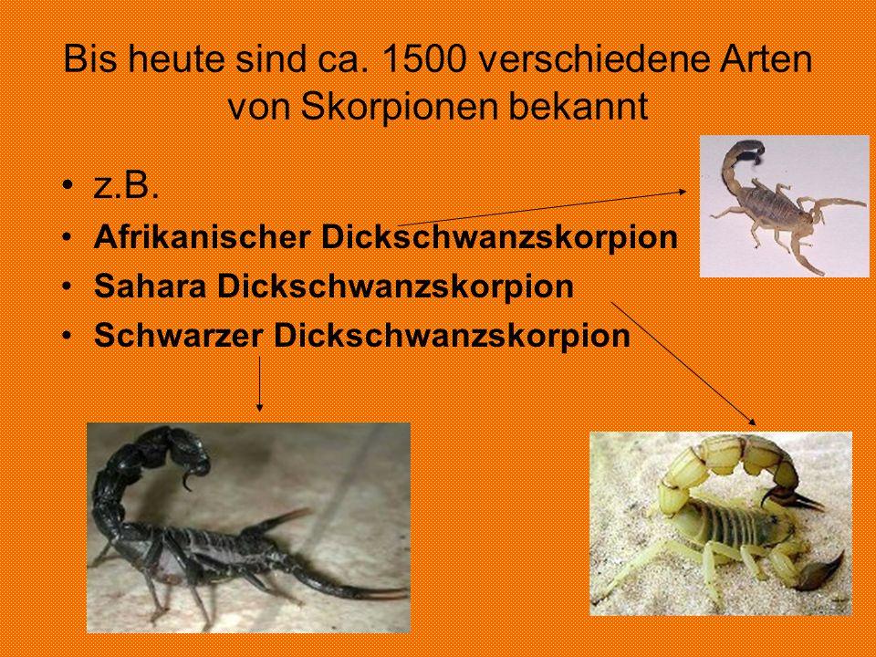 Bis heute sind ca.1500 verschiedene Arten von Skorpionen bekannt z.B.
