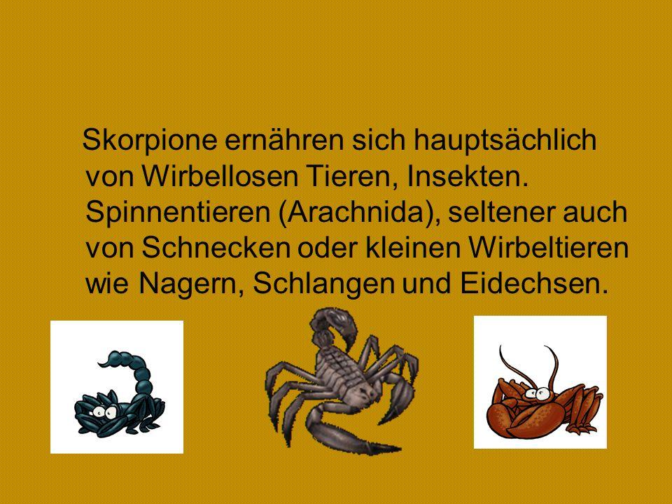 Ernährung Skorpione ernähren sich hauptsächlich von Wirbellosen Tieren, Insekten.