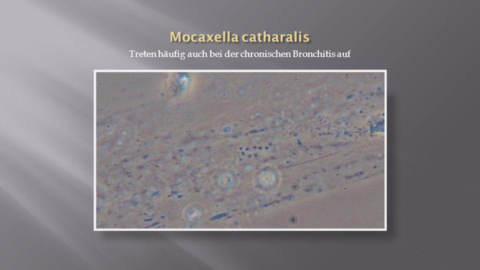 Treten häufig auch bei der chronischen Bronchitis auf