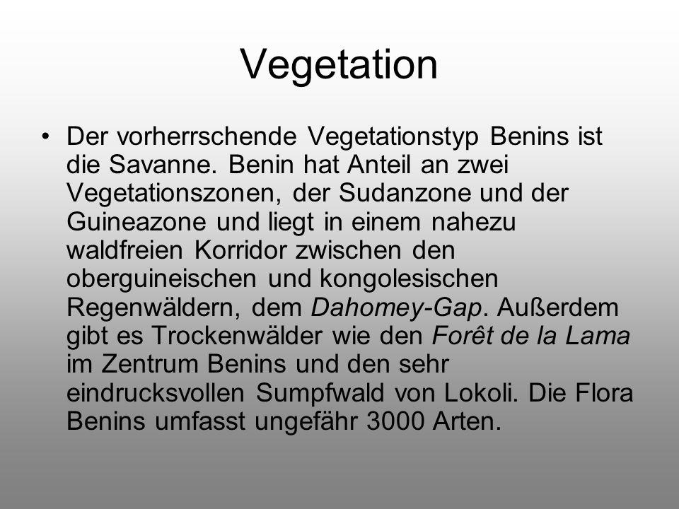 Vegetation Der vorherrschende Vegetationstyp Benins ist die Savanne.