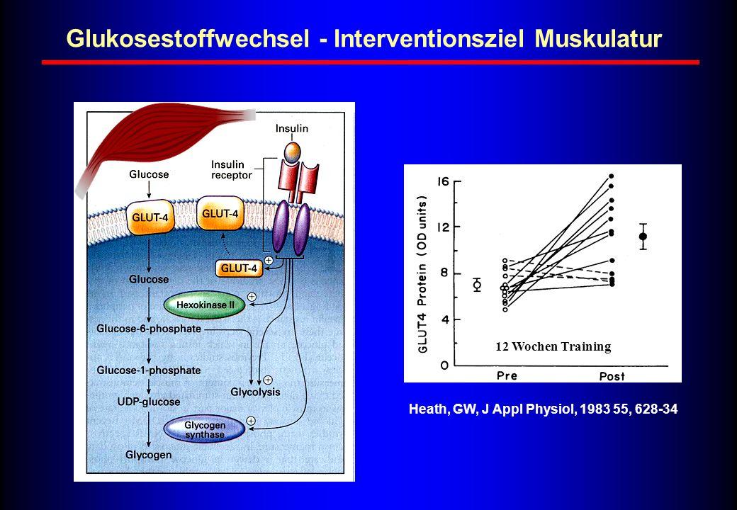 12 Wochen Training Heath, GW, J Appl Physiol, 1983 55, 628-34 Glukosestoffwechsel - Interventionsziel Muskulatur