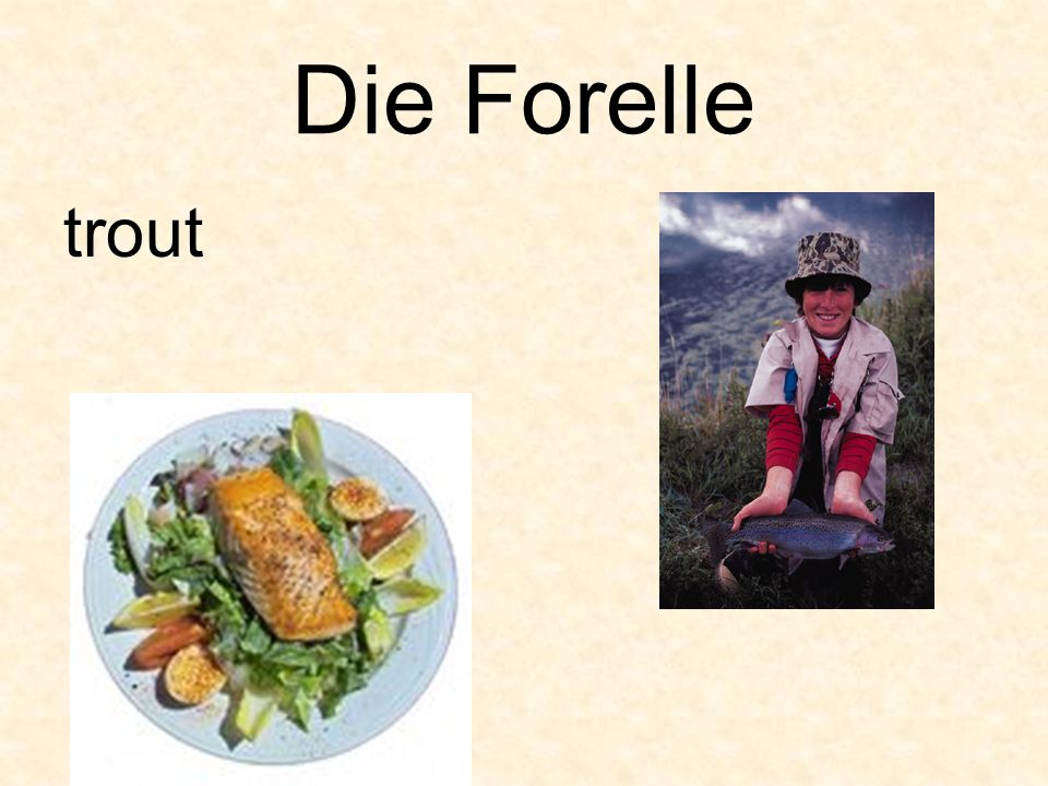 Die Forelle trout