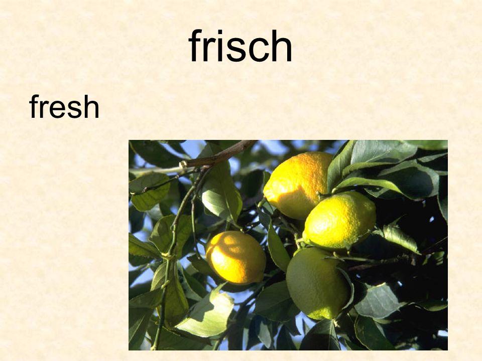 frisch fresh