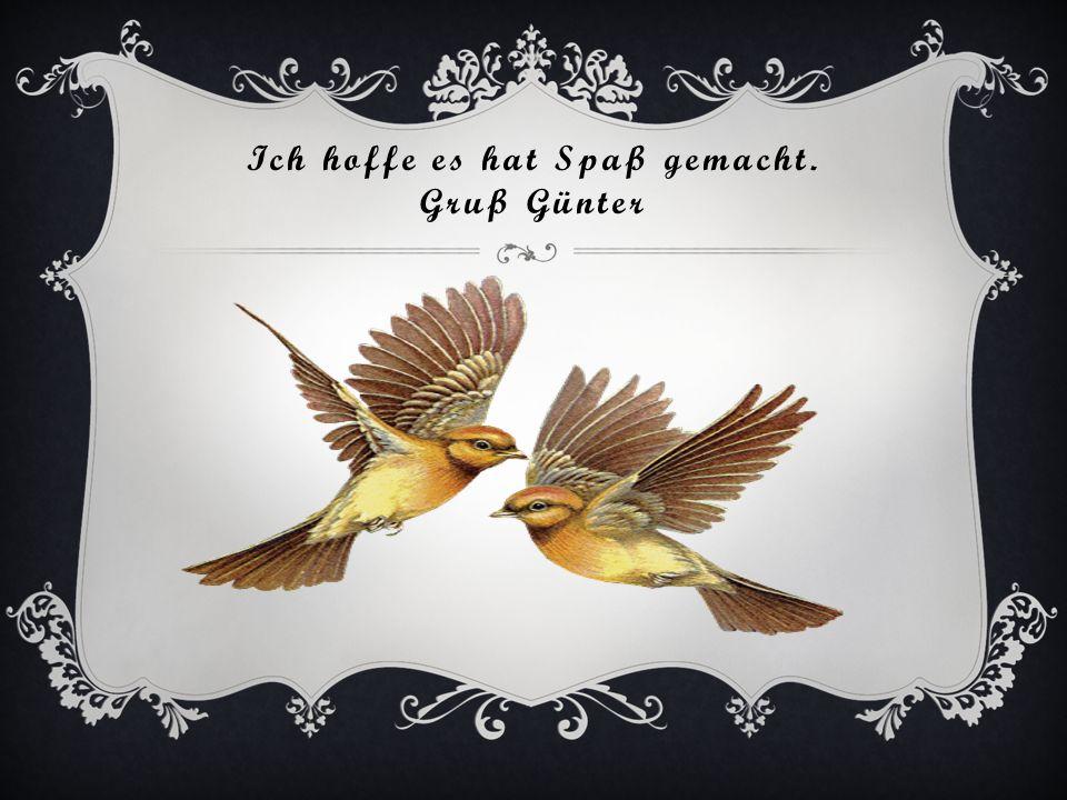 Zum Abschluß den schönsten Paradiesvogel