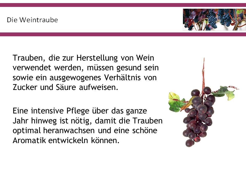 Trauben, die zur Herstellung von Wein verwendet werden, müssen gesund sein sowie ein ausgewogenes Verhältnis von Zucker und Säure aufweisen.