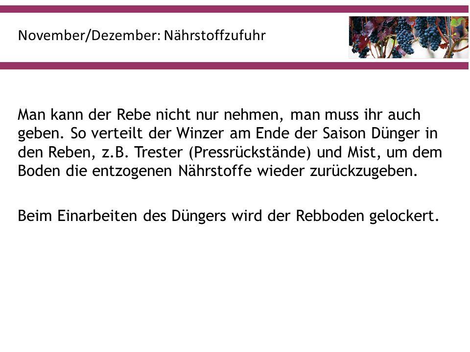 November/Dezember: Nährstoffzufuhr Man kann der Rebe nicht nur nehmen, man muss ihr auch geben.