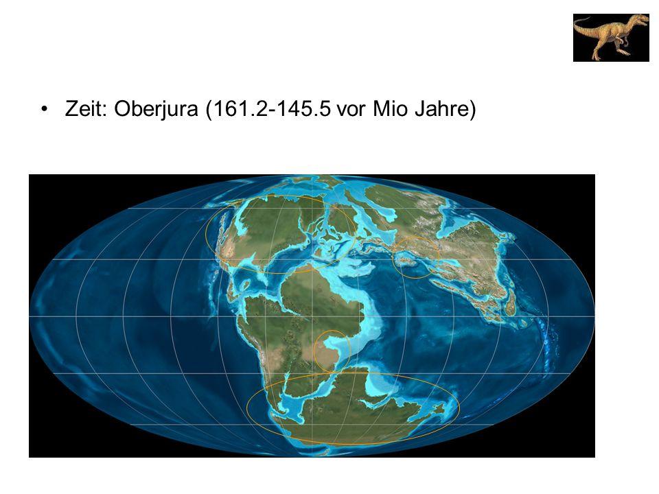 Zeit: Oberjura (161.2-145.5 vor Mio Jahre)