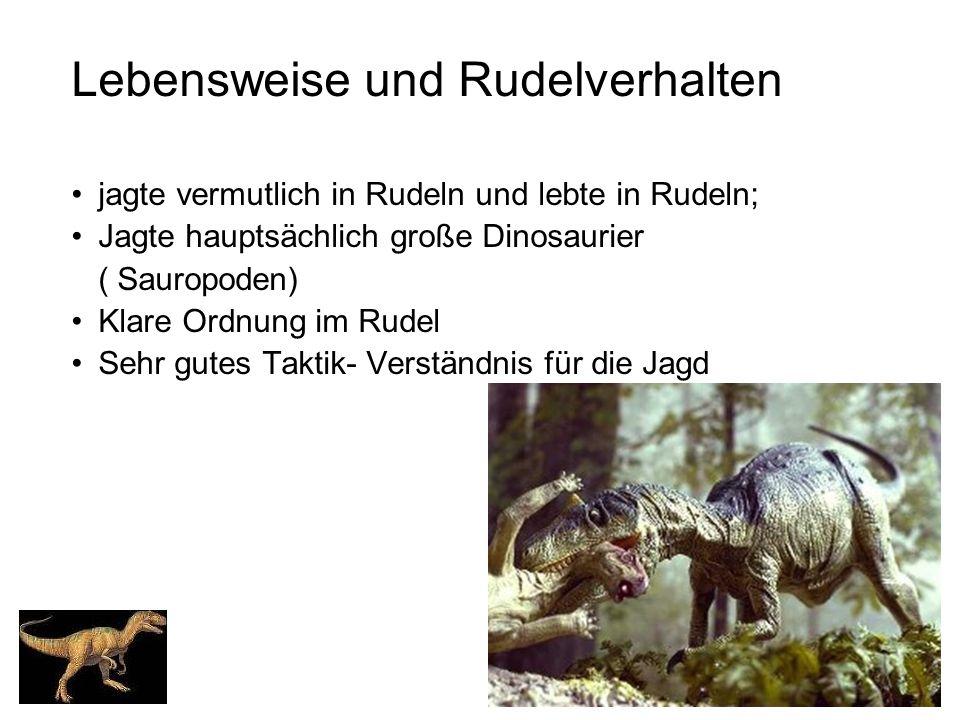 Lebensweise und Rudelverhalten jagte vermutlich in Rudeln und lebte in Rudeln; Jagte hauptsächlich große Dinosaurier ( Sauropoden) Klare Ordnung im Ru