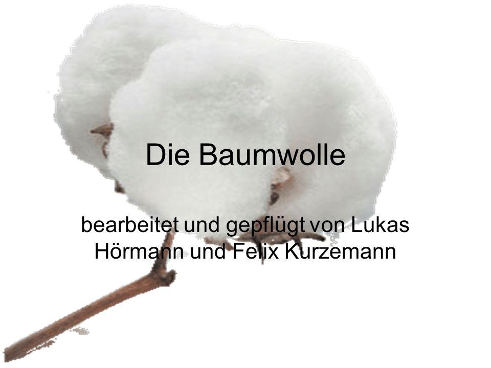 Die Baumwolle bearbeitet und gepflügt von Lukas Hörmann und Felix Kurzemann