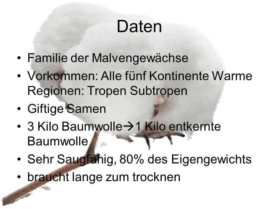 Daten Familie der Malvengewächse Vorkommen: Alle fünf Kontinente Warme Regionen: Tropen Subtropen Giftige Samen 3 Kilo Baumwolle  1 Kilo entkernte Ba