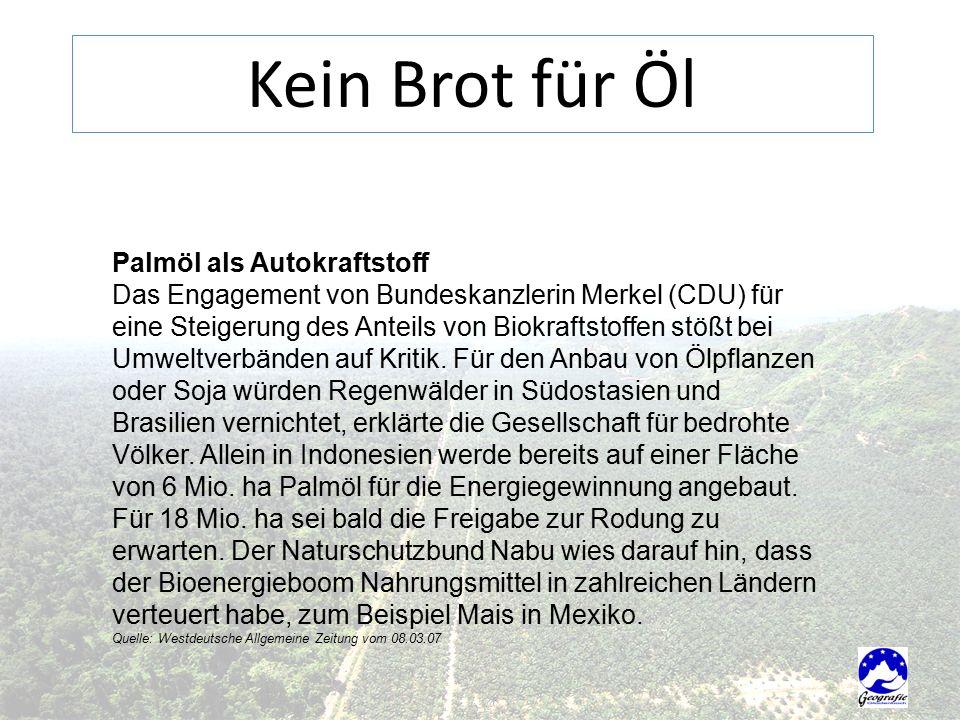 Palmöl als Autokraftstoff Das Engagement von Bundeskanzlerin Merkel (CDU) für eine Steigerung des Anteils von Biokraftstoffen stößt bei Umweltverbänden auf Kritik.