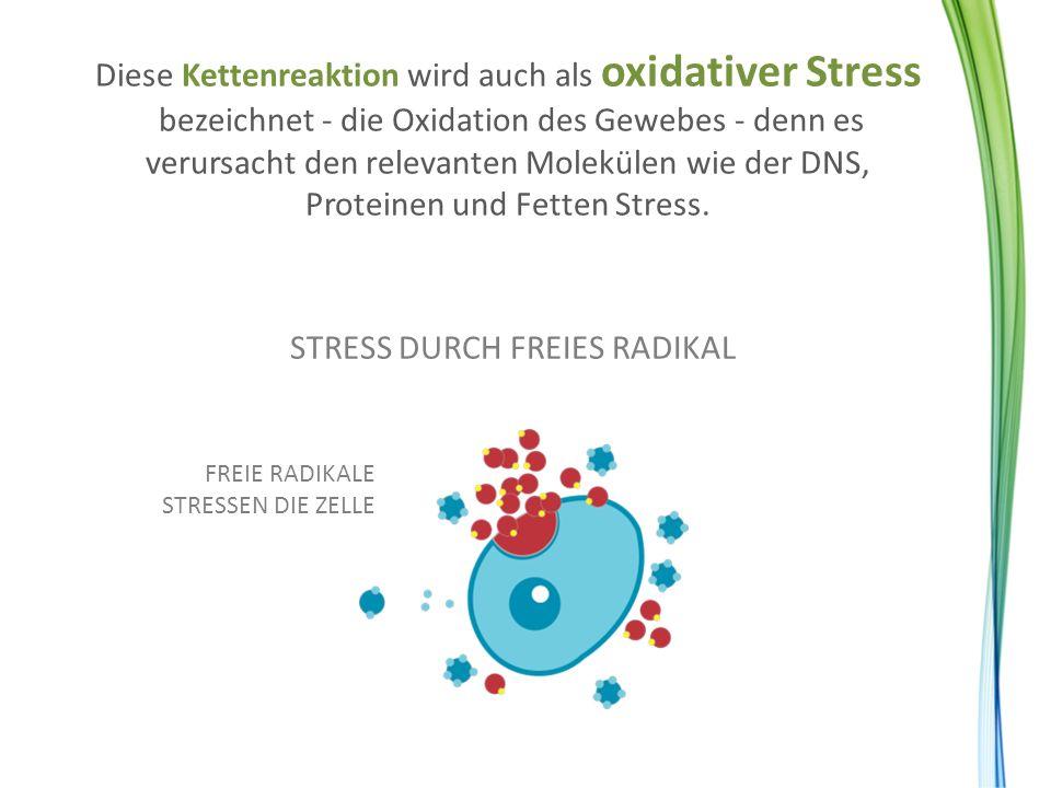 Diese Kettenreaktion wird auch als oxidativer Stress bezeichnet - die Oxidation des Gewebes - denn es verursacht den relevanten Molekülen wie der DNS,