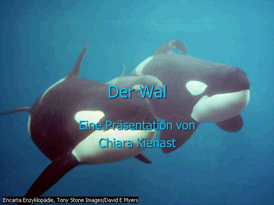 Der Wal Eine Präsentation von Chiara Kienast